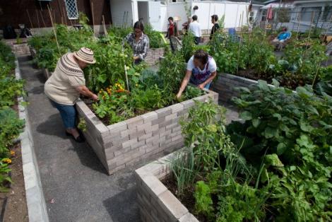Les femmes impliquées dans le projet récoltent les fruits de leur travail. Photo: Olivier Croteau